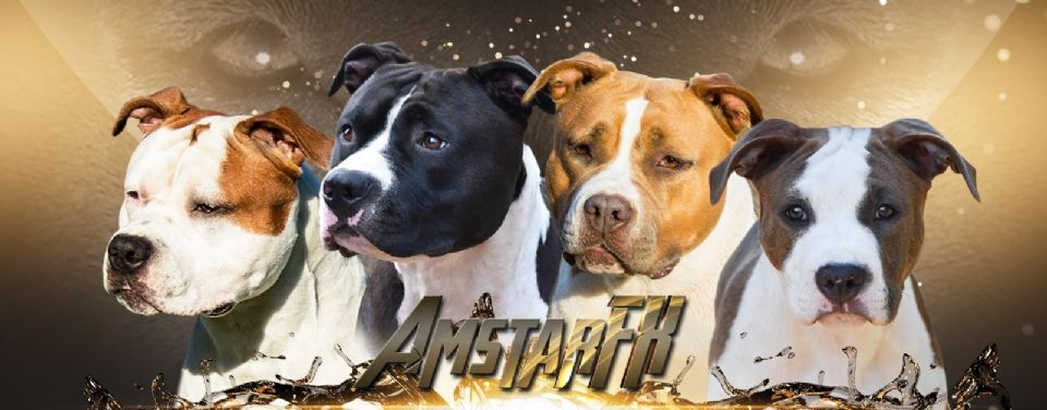 AmstarFX American Staffordshire Terriers